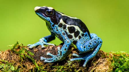 Beginner's Guide to Keeping Frogs as Pets - Frog Pets