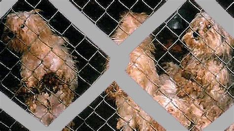 Petition · Agricultural Minister Norm Letnick: Stop puppy