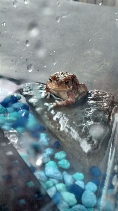 How to Keep a Wild Caught Toad As a Pet (with Pictures