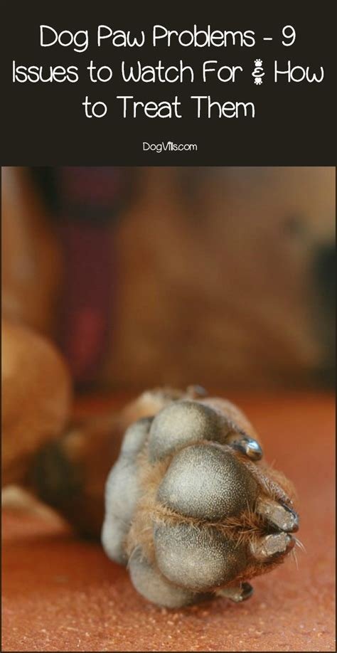 Dog Paw Problems: 9 Issues to Watch For & How to Treat Them
