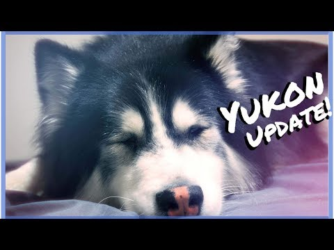 Alaskan Malamute puppies for sale | Coventry, West